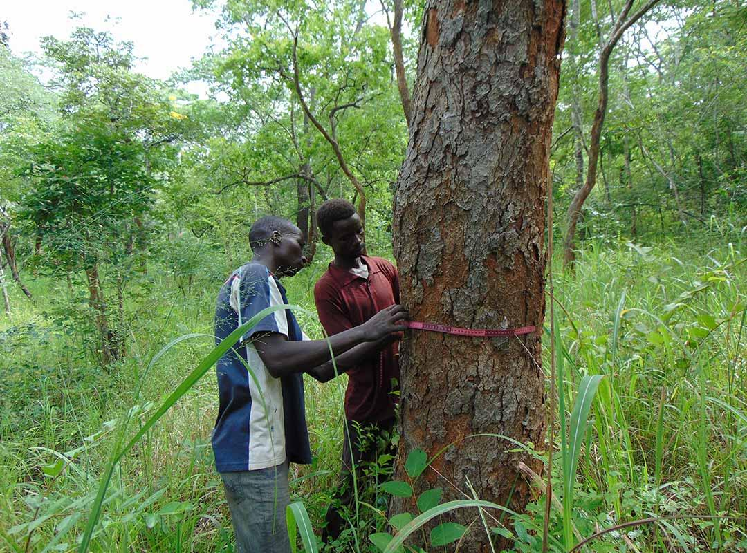 Participatory Forest Resources Assesment