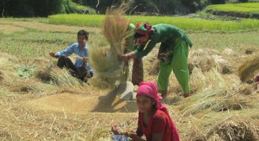 People working on a field